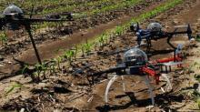 Drons nun campo de millo.